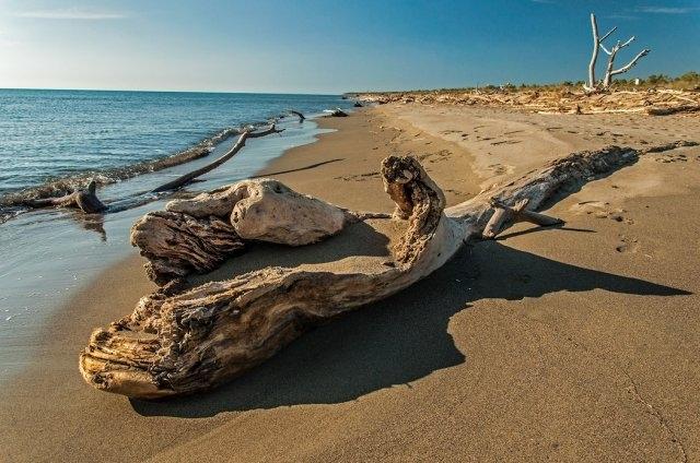 Domenica 2 luglio tutti a Principina a Mare a ripulire la spiaggia dalle schiume paraffiniche