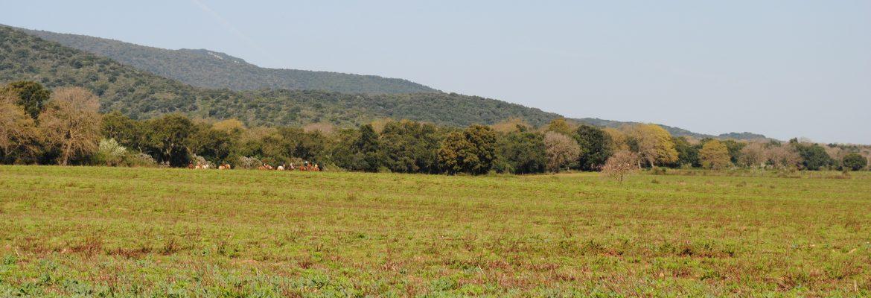 Campo del Gavazzi – A cavallo tra gli animali selvatici