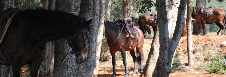 San Rabano: between wood and mysticism