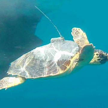 Pescatori e tartarughe marine: facciamo luce in mare! –  incontro 25 febbraio all'Acquario di Talamone