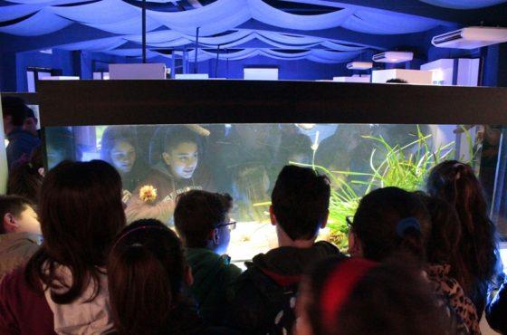 The openings of the Talamone Aquarium