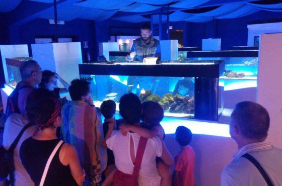 Talamone Aquarium: closed