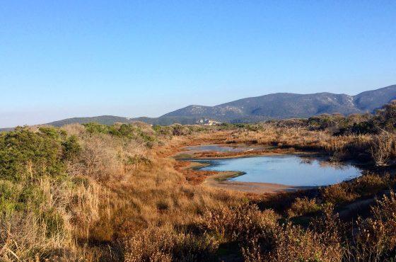Nomina area Ramsar Padule della Trappola – Bocca d'Ombrone