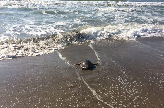 Arenella è tornata libera nel mare