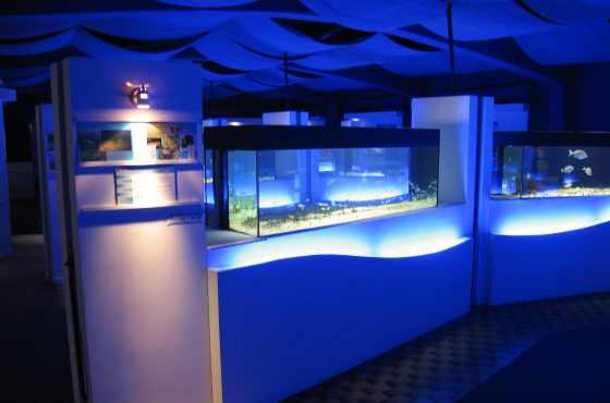 The Talamone Aquarium openings in June
