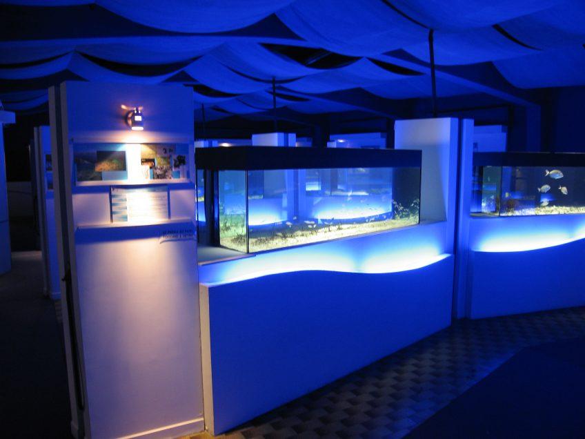 The Talamone Aquarium openings in June