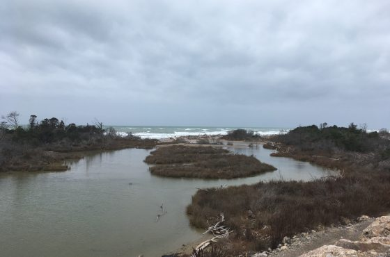 Resoconto dell'escursione nella zona umida del Parco della Maremma