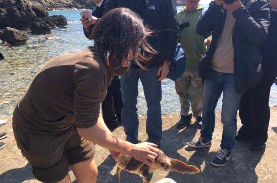 Una giornata di formazione sui nidi di Caretta caretta e la liberazione di Guelfa