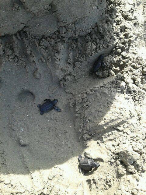 Giornata di formazione sui nidi delle Caretta caretta