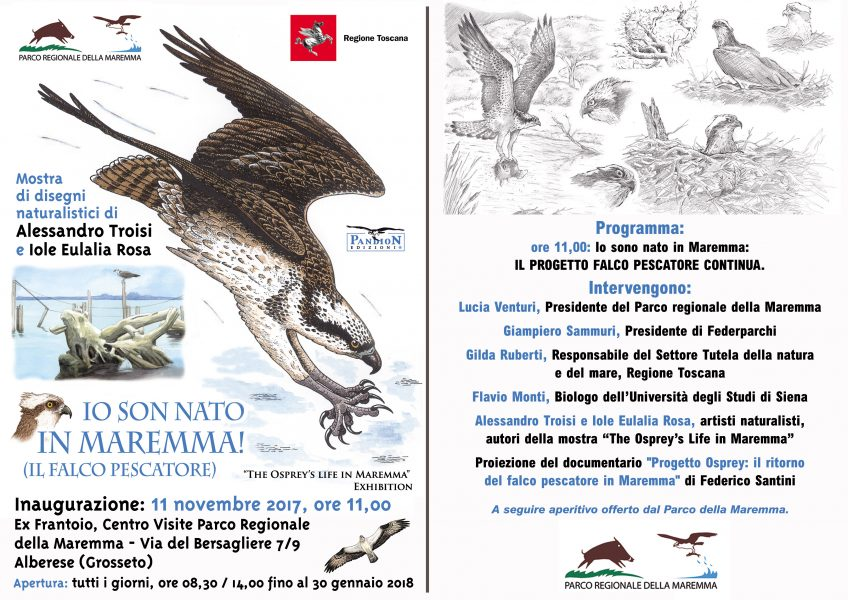 11 novembre: Io sono nato in Maremma il Progetto falco pescatore continua