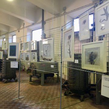 """La mostra """"The Osprey's life in Maremma"""" prorogata al 15 marzo"""