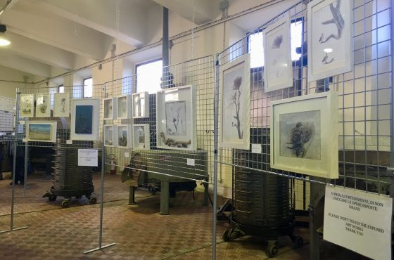 "The exhibition ""The Osprey's life in Maremma"" extended to March 15th"