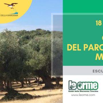 18 novembre: Gli Olivi del Parco della Maremma