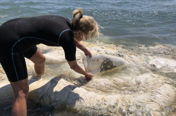 Parco della Maremma: identificato il cetaceo spiaggiato a Collelungo