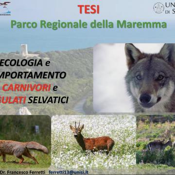 Possibilità di lavoro sul campo per tesi di laurea in ambito Ecologia e Comportamento di Carnivori e Ungulati