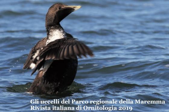 """Sabato 11 gennaio: presentazione de """"Gli uccelli del Parco regionale della Maremma"""" – Rivista italiana di Ornitologia I Fascicoloa cura di Pietro Giovacchini"""