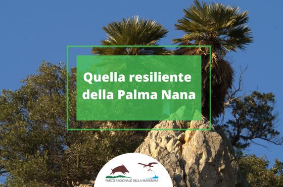 Quella resiliente della Palma Nana: ecco dove puoi ammirarla al Parco della Maremma
