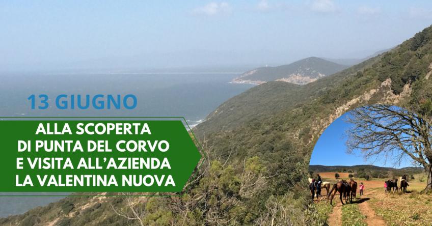 ANNULLATO 13 giugno: Alla scoperta di Punta del Corvo e visita all'azienda la Valentina Nuova