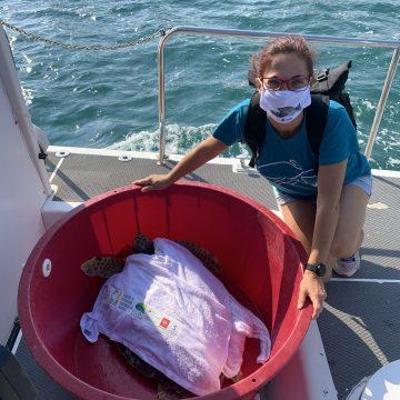 La tartaruga Caretta caretta, curata al Centro Tartanet di Talamone, liberata in mare è stata dopo poco recuperata